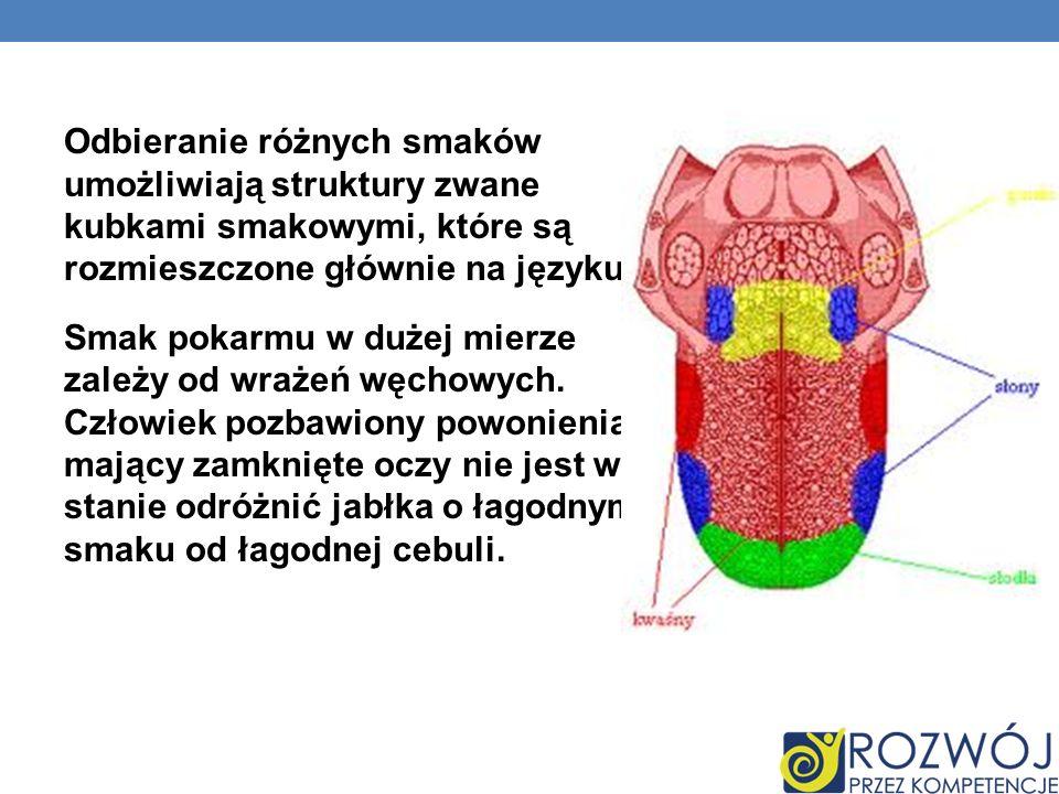 Odbieranie różnych smaków umożliwiają struktury zwane kubkami smakowymi, które są rozmieszczone głównie na języku. Smak pokarmu w dużej mierze zależy