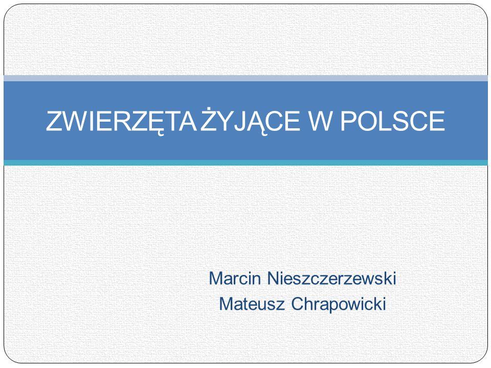 Marcin Nieszczerzewski Mateusz Chrapowicki ZWIERZĘTA ŻYJĄCE W POLSCE