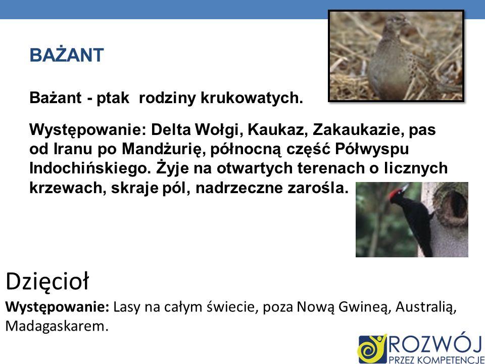 BAŻANT Bażant - ptak rodziny krukowatych. Występowanie: Delta Wołgi, Kaukaz, Zakaukazie, pas od Iranu po Mandżurię, północną część Półwyspu Indochińsk