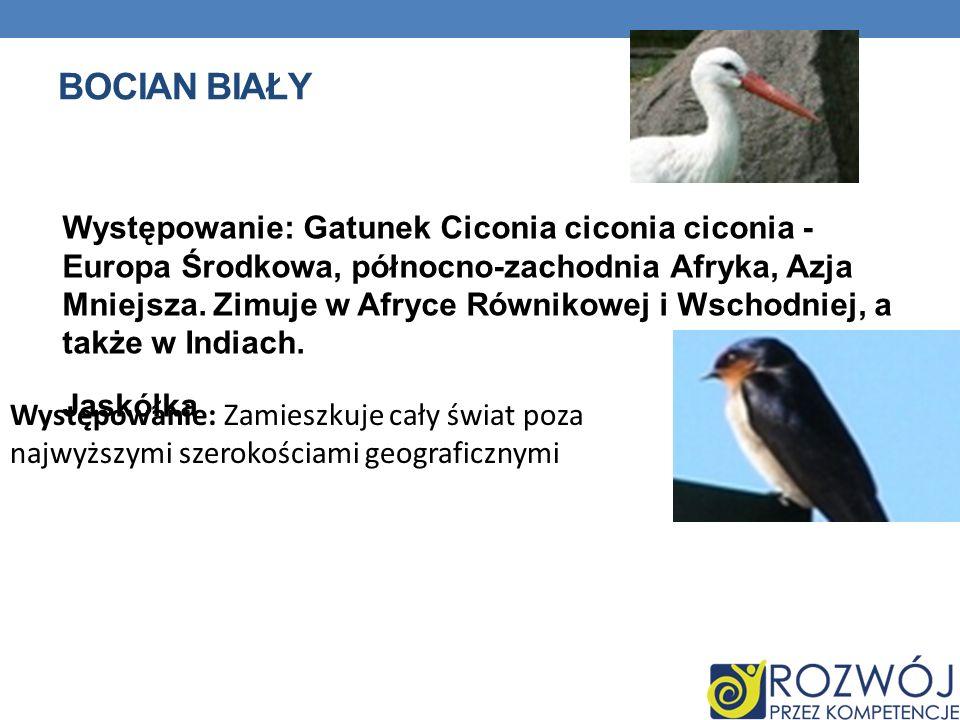 BOCIAN BIAŁY Występowanie: Gatunek Ciconia ciconia ciconia - Europa Środkowa, północno-zachodnia Afryka, Azja Mniejsza. Zimuje w Afryce Równikowej i W
