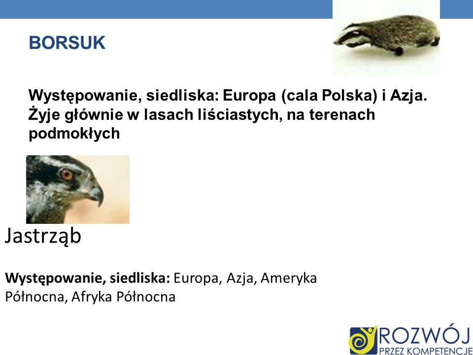 BORSUK Występowanie, siedliska: Europa (cala Polska) i Azja. Żyje głównie w lasach liściastych, na terenach podmokłych Jastrząb Występowanie, siedlisk