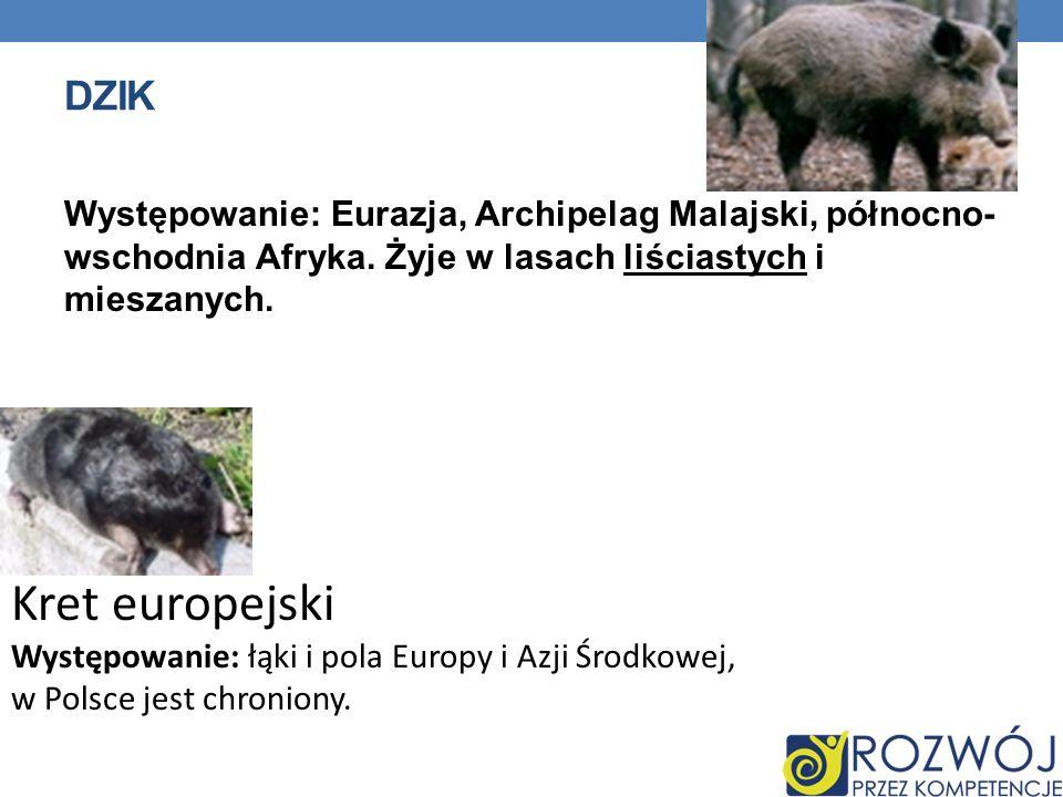 DZIK Występowanie: Eurazja, Archipelag Malajski, północno- wschodnia Afryka.