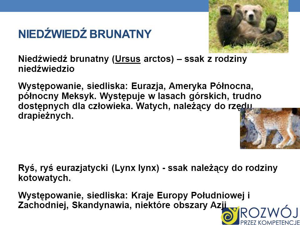 NIEDŹWIEDŹ BRUNATNY Niedźwiedź brunatny (Ursus arctos) – ssak z rodziny niedźwiedzio Występowanie, siedliska: Eurazja, Ameryka Północna, północny Meksyk.