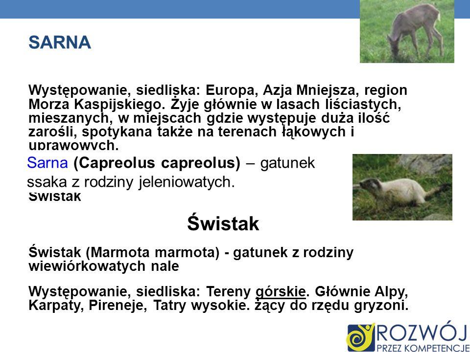 SARNA Występowanie, siedliska: Europa, Azja Mniejsza, region Morza Kaspijskiego. Żyje głównie w lasach liściastych, mieszanych, w miejscach gdzie wyst