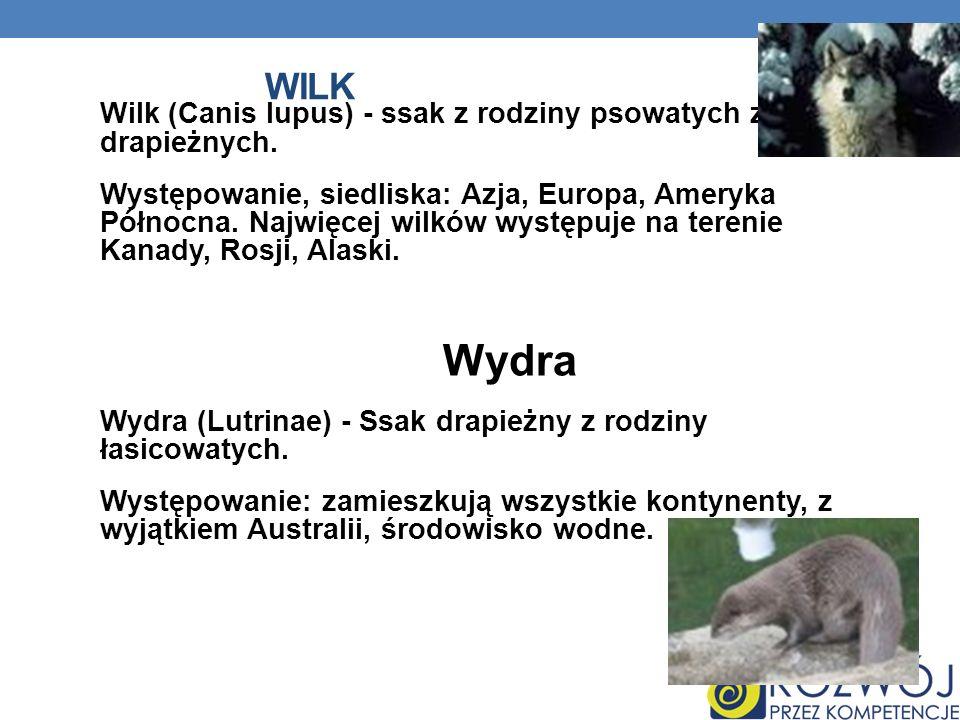 WILK Wilk (Canis lupus) - ssak z rodziny psowatych z rzędu drapieżnych. Występowanie, siedliska: Azja, Europa, Ameryka Północna. Najwięcej wilków wyst