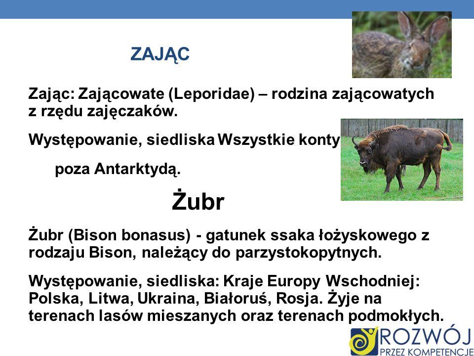 ZAJĄC Zając: Zającowate (Leporidae) – rodzina zającowatych z rzędu zajęczaków. Występowanie, siedliska Wszystkie kontynenty poza Antarktydą. Żubr Żubr