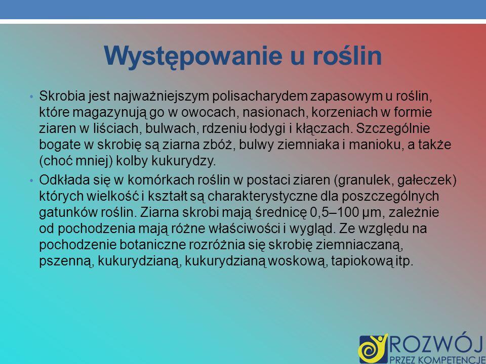 Występowanie u roślin Skrobia jest najważniejszym polisacharydem zapasowym u roślin, które magazynują go w owocach, nasionach, korzeniach w formie zia