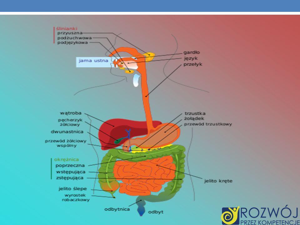 Trawienie u człowieka W procesie trawienia zaangażowanych jest wiele mechanizmów i układów (hormonalny, autonomiczny układ nerwowy), które w skoordynowany sposób doprowadzają do rozbicia składników pokarmowych do postaci, która będzie zdolna do wchłaniania w przewodzie pokarmowym.