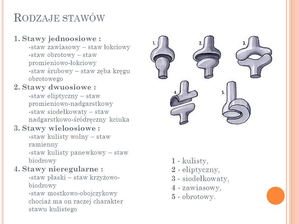 R ODZAJE STAWÓW 1. Stawy jednoosiowe : -staw zawiasowy – staw łokciowy -staw obrotowy – staw promieniowo-łokciowy -staw śrubowy – staw zęba kręgu obro