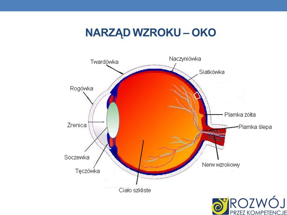 ADAPTACJA I AKOMODACJA OKA Adaptacja oka polega na regulacji wielkości źrenic.