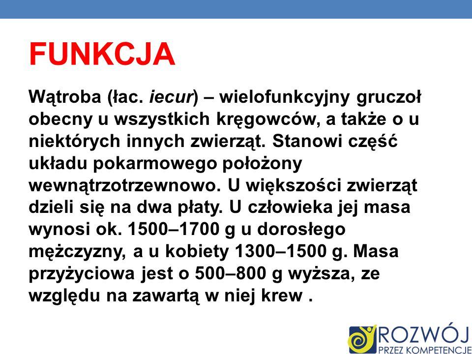 FUNKCJA Wątroba (łac. iecur) – wielofunkcyjny gruczoł obecny u wszystkich kręgowców, a także o u niektórych innych zwierząt. Stanowi część układu poka