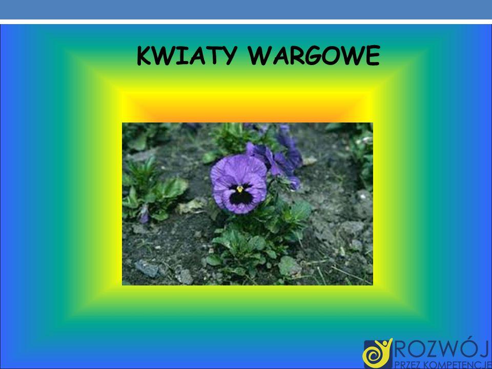 KWIATY WARGOWE