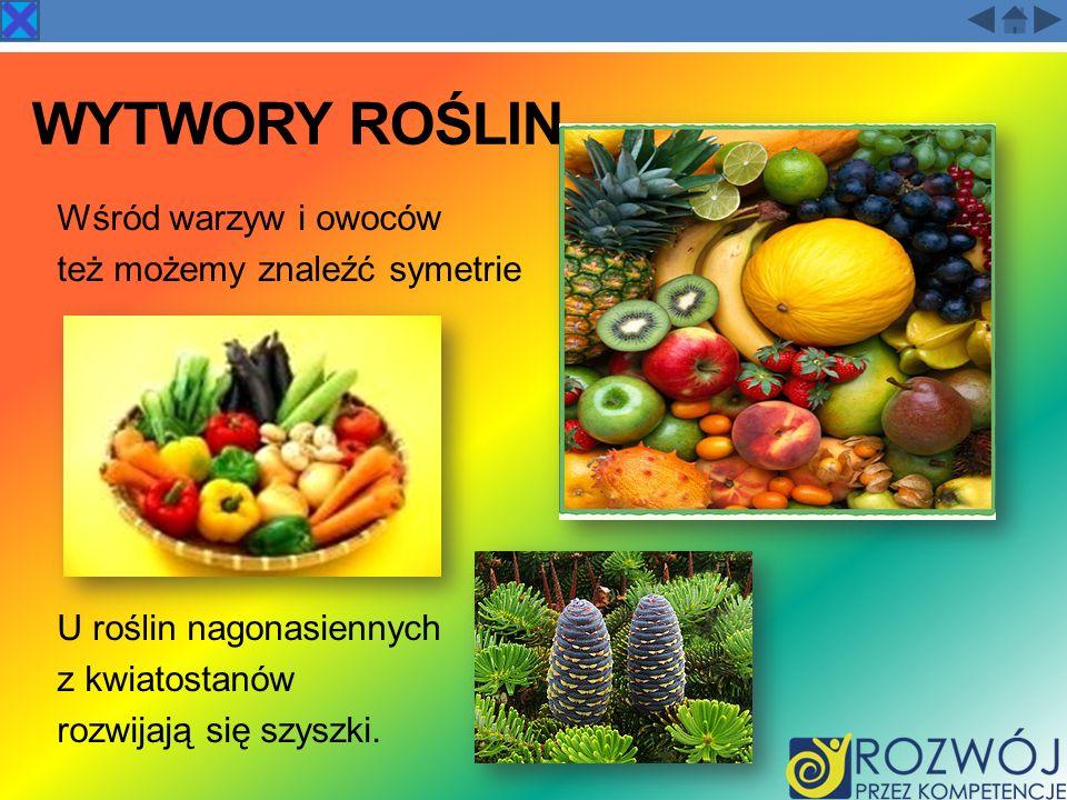 WYTWORY ROŚLIN Wśród warzyw i owoców też możemy znaleźć symetrie U roślin nagonasiennych z kwiatostanów rozwijają się szyszki.