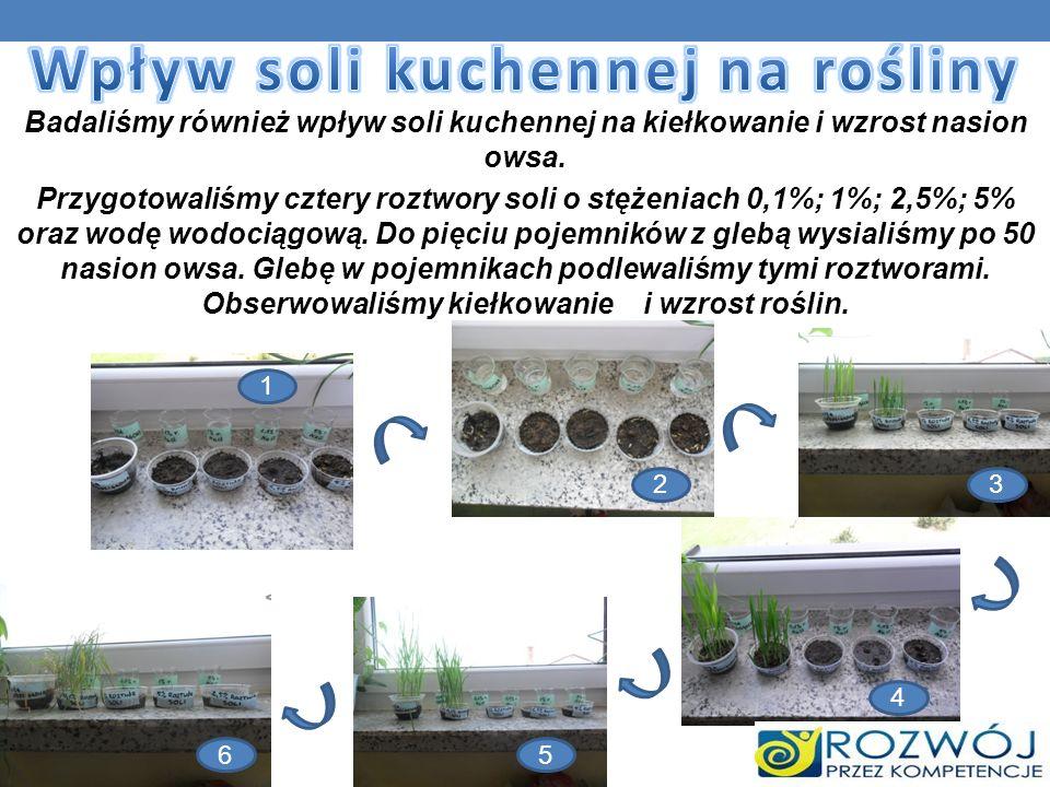 Badaliśmy również wpływ soli kuchennej na kiełkowanie i wzrost nasion owsa. Przygotowaliśmy cztery roztwory soli o stężeniach 0,1%; 1%; 2,5%; 5% oraz
