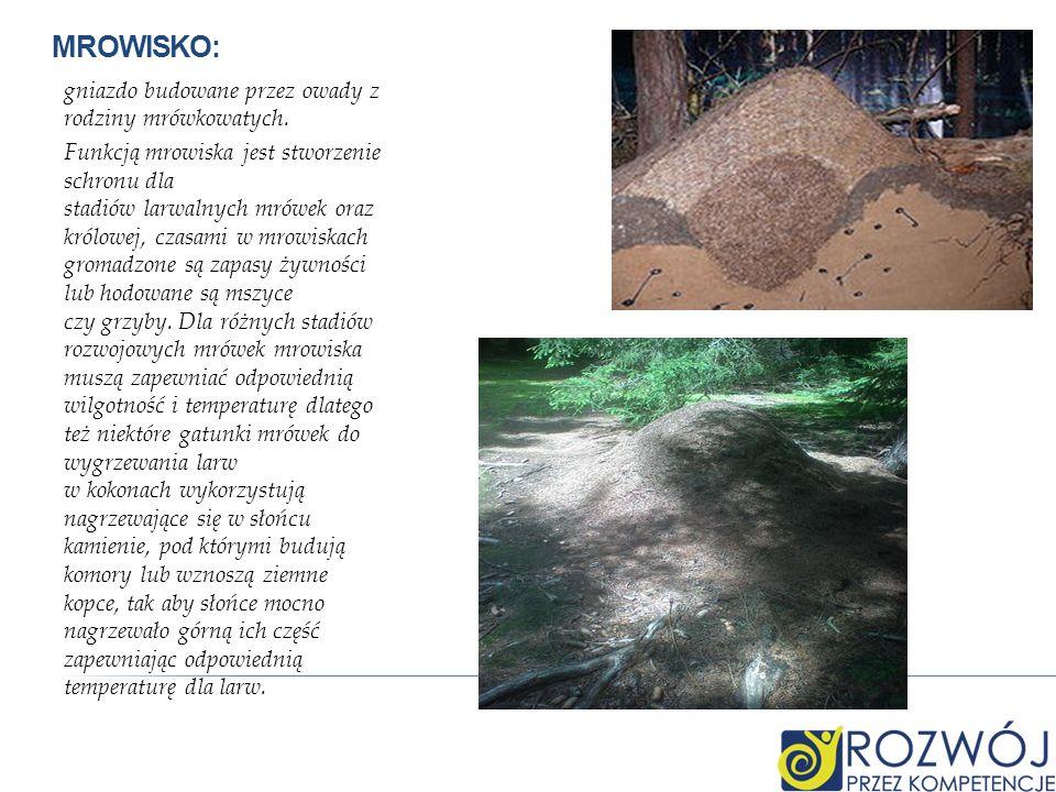 MROWISKO: gniazdo budowane przez owady z rodziny mrówkowatych. Funkcją mrowiska jest stworzenie schronu dla stadiów larwalnych mrówek oraz królowej, c