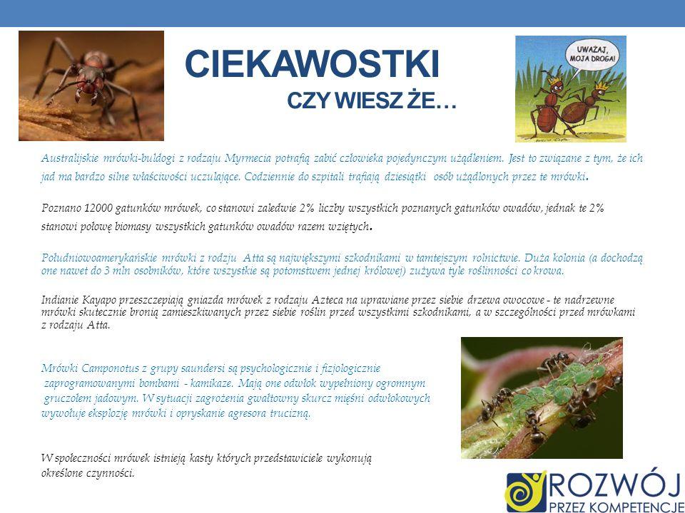 CIEKAWOSTKI CZY WIESZ ŻE… Australijskie mrówki-buldogi z rodzaju Myrmecia potrafią zabić człowieka pojedynczym użądleniem. Jest to związane z tym, że