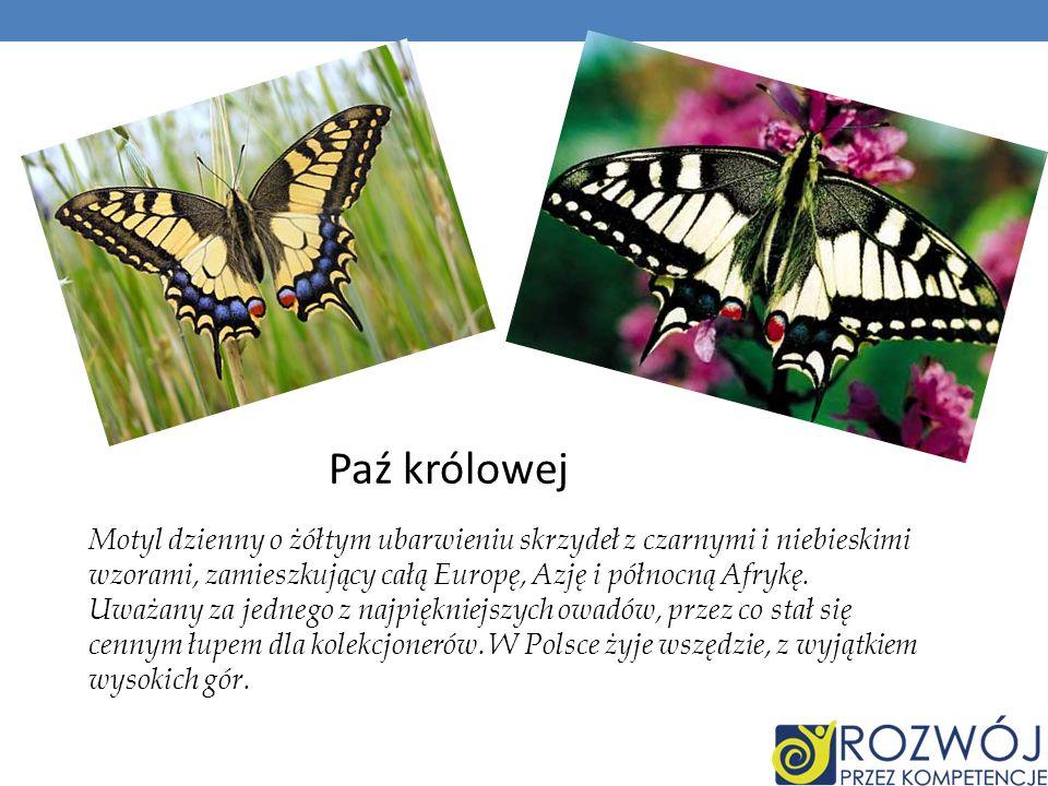 Paź królowej Motyl dzienny o żółtym ubarwieniu skrzydeł z czarnymi i niebieskimi wzorami, zamieszkujący całą Europę, Azję i północną Afrykę. Uważany z