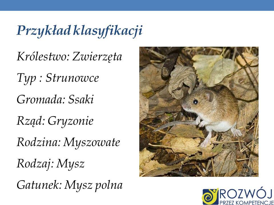 Przykład klasyfikacji Królestwo: Zwierzęta Typ : Strunowce Gromada: Ssaki Rząd: Gryzonie Rodzina: Myszowate Rodzaj: Mysz Gatunek: Mysz polna