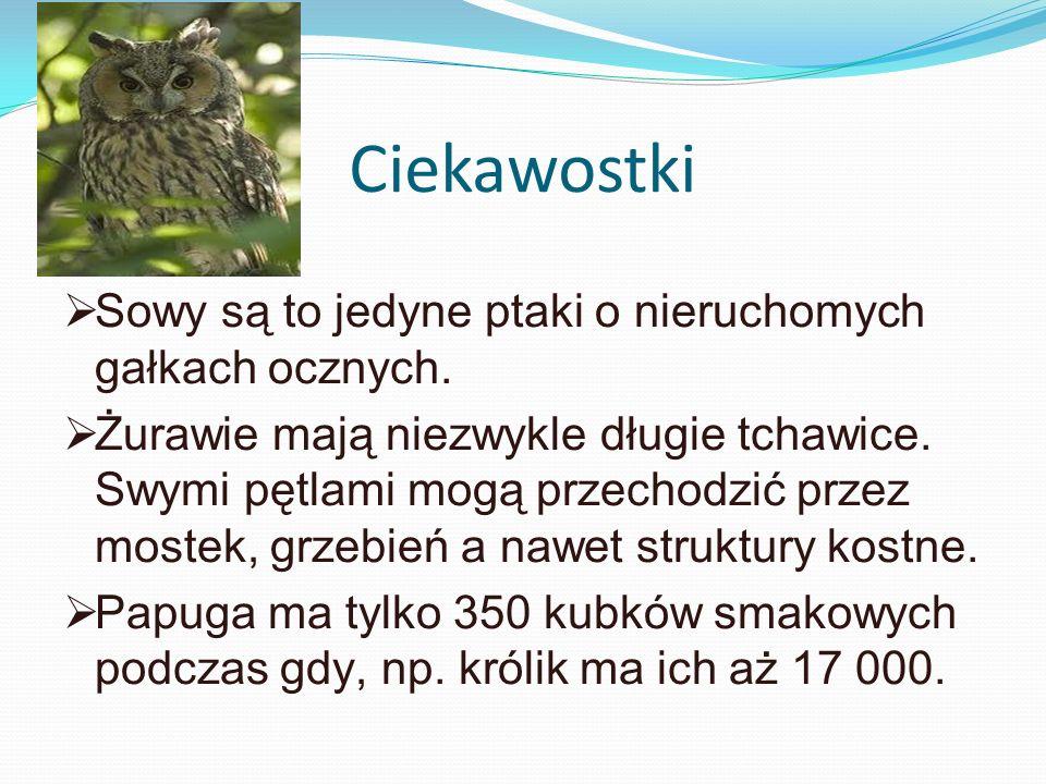 Ciekawostki Sowy są to jedyne ptaki o nieruchomych gałkach ocznych. Żurawie mają niezwykle długie tchawice. Swymi pętlami mogą przechodzić przez moste
