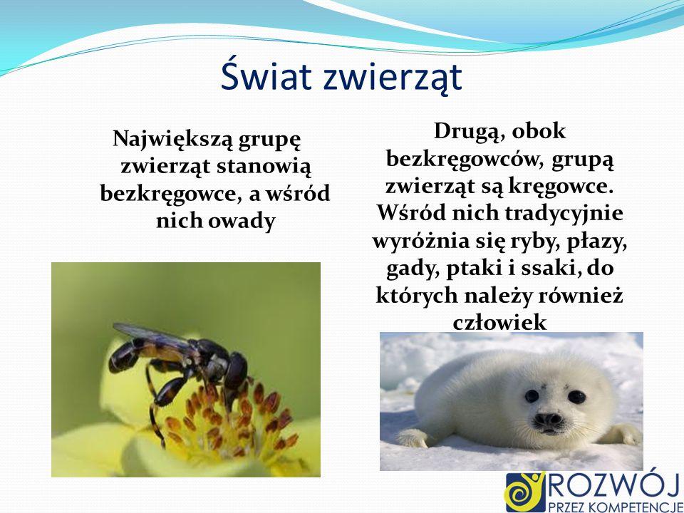 Świat zwierząt Największą grupę zwierząt stanowią bezkręgowce, a wśród nich owady Drugą, obok bezkręgowców, grupą zwierząt są kręgowce. Wśród nich tra