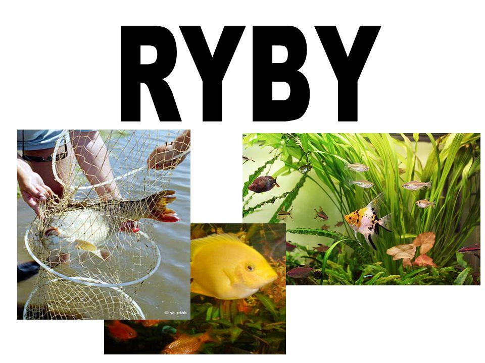 Kręgowce RYBY – zmiennocieplne kręgowce wodne oddychające skrzelami, posiadające szczęki i poruszające się za pomocą płetw; pojawiły się około 480mln lat temu; Ichtiologia to dział zoologii zajmujący się tymi organizmami.