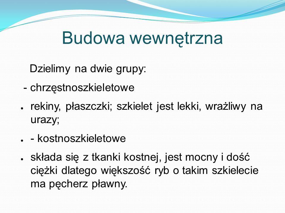 Bibliografia www.google.plwww.google.pl - grafika; http://naszewody.civ.pl/index.php?option=com_content&view=article&id=126:budowa- ryby&catid=40:nauka-wdkarstwa&Itemid=124 http://pl.wikipedia.org/wiki/Ryby www.ryby-akwariowe.blogstop.com http://wedkomania.pl/dynamik.php?n=siatka%20na%20ryby http://www.toya.net.pl/~kaniadk/html/ryby_akwariowe.html http://rudy.mif.pg.gda.pl/~mgacek/ptaki.html http://rachma.org/ptaki1.php http://ptasieogrody.pl http://o-ptakach.blog.onet.pl/Uklad-oddechowy-i-narzadow-kra,2,ID399424444,n http://pl.wikipedia.org/wiki/Ptaki http://ssakiplazygady.blogspot.com/p/son-afrykanski.html http://www.strykowski.net/kuba/Mlody_czlowiek_- _zdjecie_mlodego_czlowieka_2470.php http://www.wwfpl.panda.org/co_robimy/gatunki_glowna/aktualnosci.cfm?5260/ Czy-pozwolimy-przetrwac-wielorybom http://www.onlinephotographers.org/pl/foto/1532