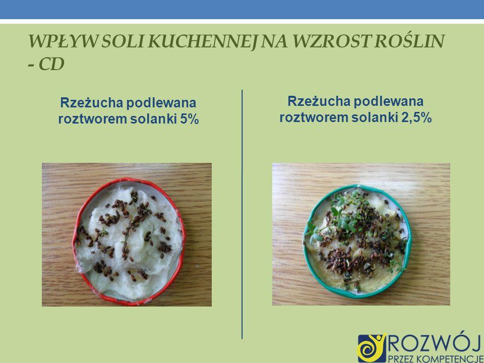 WPŁYW SOLI KUCHENNEJ NA WZROST ROŚLIN - CD Rzeżucha podlewana roztworem solanki 5% Rzeżucha podlewana roztworem solanki 2,5%