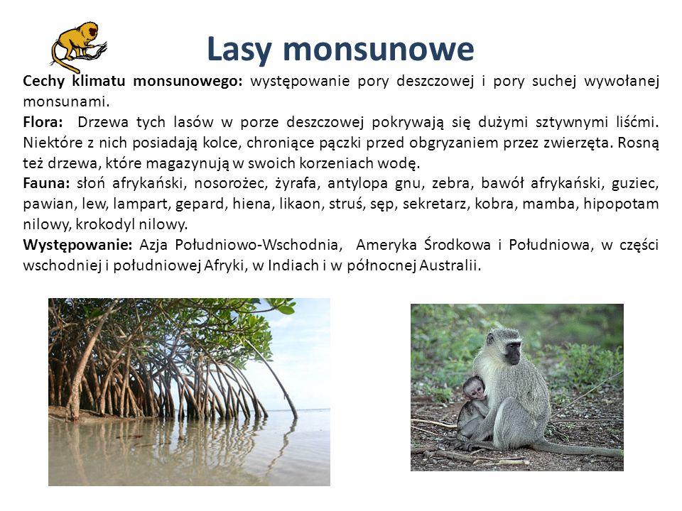 Lasy monsunowe Cechy klimatu monsunowego: występowanie pory deszczowej i pory suchej wywołanej monsunami. Flora: Drzewa tych lasów w porze deszczowej