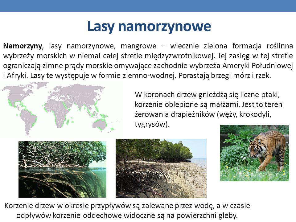 Lasy namorzynowe Namorzyny, lasy namorzynowe, mangrowe – wiecznie zielona formacja roślinna wybrzeży morskich w niemal całej strefie międzyzwrotnikowe