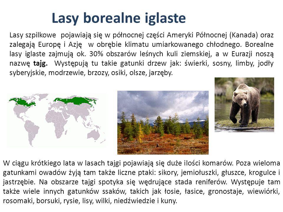 Lasy borealne iglaste Lasy szpilkowe pojawiają się w północnej części Ameryki Północnej (Kanada) oraz zalegają Europę i Azję w obrębie klimatu umiarko