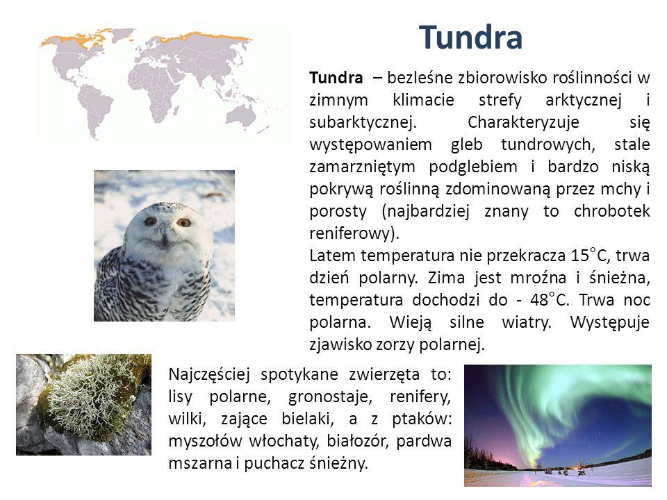Tundra Tundra – bezleśne zbiorowisko roślinności w zimnym klimacie strefy arktycznej i subarktycznej. Charakteryzuje się występowaniem gleb tundrowych