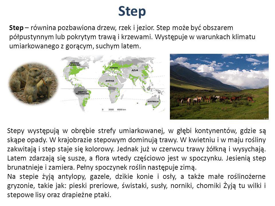 Step Step – równina pozbawiona drzew, rzek i jezior. Step może być obszarem półpustynnym lub pokrytym trawą i krzewami. Występuje w warunkach klimatu