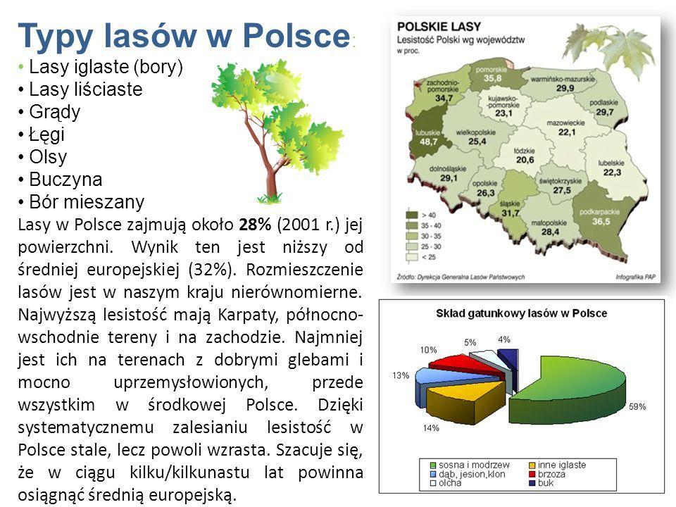 Typy lasów w Polsce : Lasy iglaste (bory) Lasy liściaste Grądy Łęgi Olsy Buczyna Bór mieszany Lasy w Polsce zajmują około 28% (2001 r.) jej powierzchn