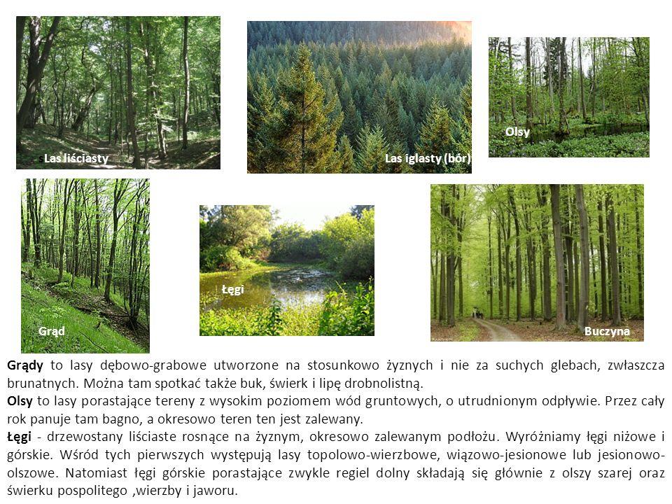sLas liściasty Grąd Las iglasty (bór) Olsy Buczyna Grądy to lasy dębowo-grabowe utworzone na stosunkowo żyznych i nie za suchych glebach, zwłaszcza br