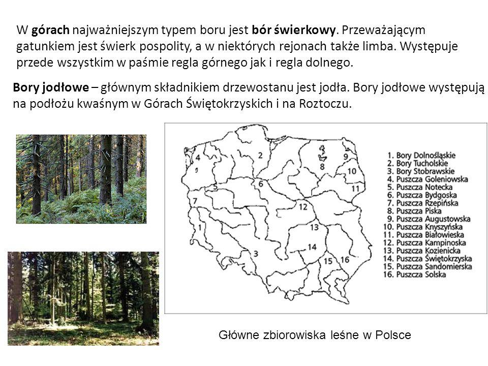 W górach najważniejszym typem boru jest bór świerkowy. Przeważającym gatunkiem jest świerk pospolity, a w niektórych rejonach także limba. Występuje p