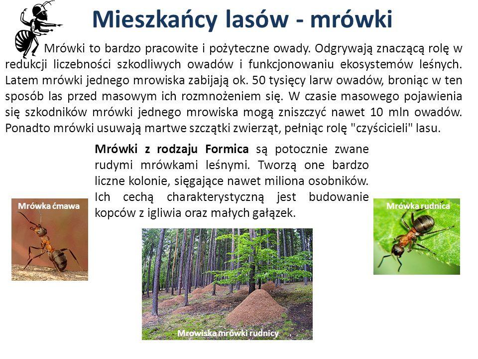 Mieszkańcy lasów - mrówki Mrówki to bardzo pracowite i pożyteczne owady. Odgrywają znaczącą rolę w redukcji liczebności szkodliwych owadów i funkcjono