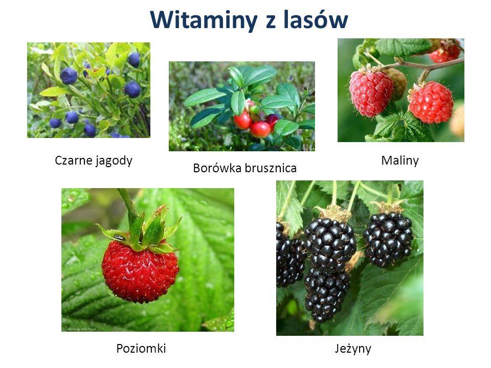 Witaminy z lasów Borówka brusznica Czarne jagody Poziomki Maliny Jeżyny