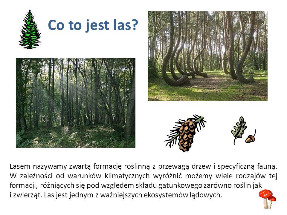 Lasem nazywamy zwartą formację roślinną z przewagą drzew i specyficzną fauną. W zależności od warunków klimatycznych wyróżnić możemy wiele rodzajów te
