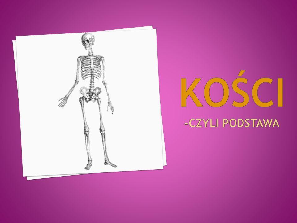 Kości są elementem budowy szkieletu, będącego konstrukcją dla całego ciała.