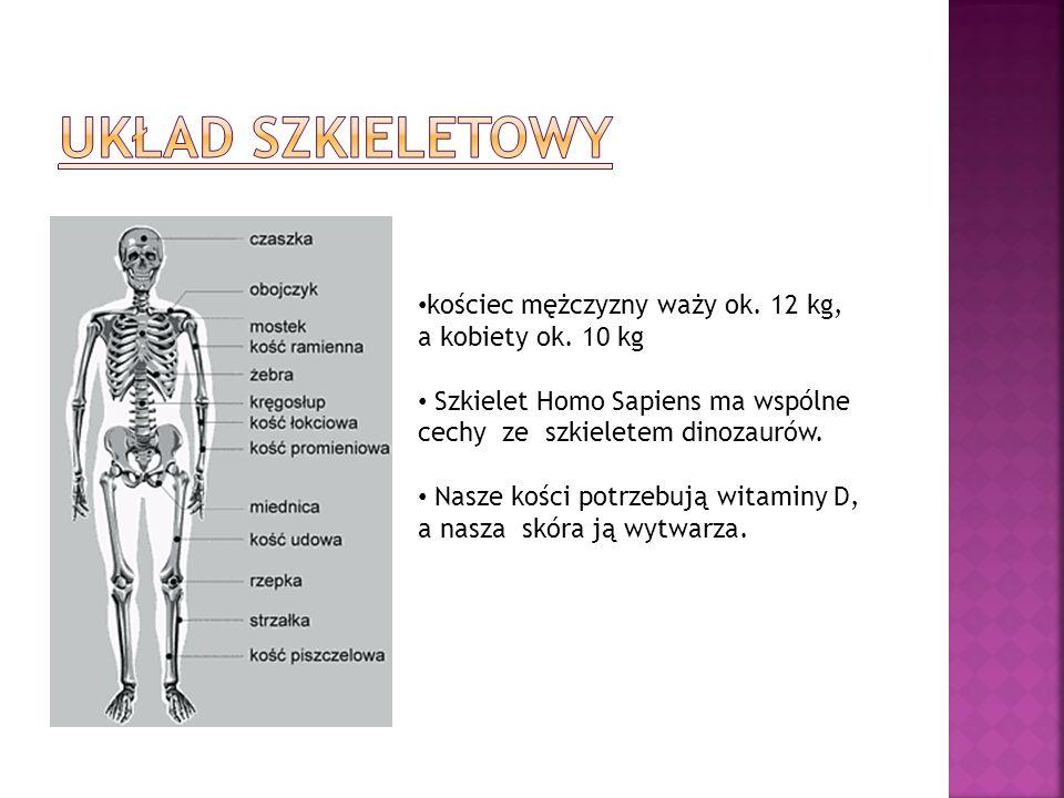 kościec mężczyzny waży ok. 12 kg, a kobiety ok. 10 kg Szkielet Homo Sapiens ma wspólne cechy ze szkieletem dinozaurów. Nasze kości potrzebują witaminy