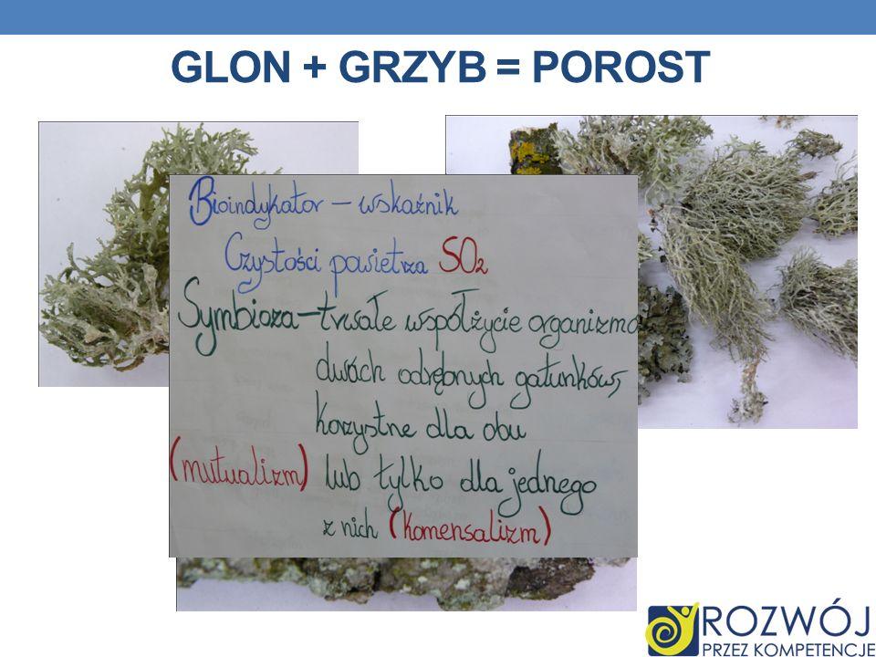 GLON + GRZYB = POROST