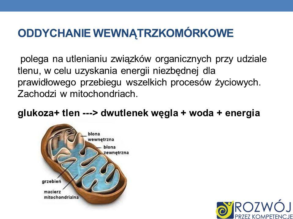 ODDYCHANIE WEWNĄTRZKOMÓRKOWE polega na utlenianiu związków organicznych przy udziale tlenu, w celu uzyskania energii niezbędnej dla prawidłowego przeb