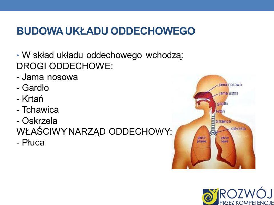 BUDOWA UKŁADU ODDECHOWEGO W skład układu oddechowego wchodzą: DROGI ODDECHOWE: - Jama nosowa - Gardło - Krtań - Tchawica - Oskrzela WŁAŚCIWY NARZĄD OD
