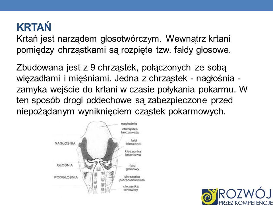 KRTAŃ Krtań jest narządem głosotwórczym. Wewnątrz krtani pomiędzy chrząstkami są rozpięte tzw. fałdy głosowe. Zbudowana jest z 9 chrząstek, połączonyc