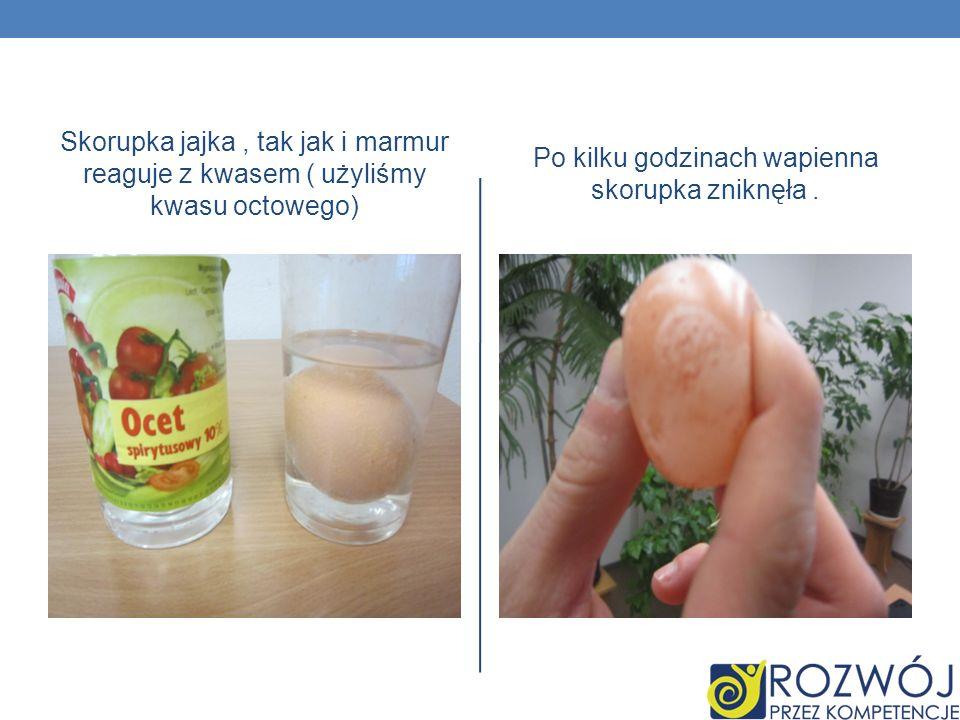 Skorupka jajka, tak jak i marmur reaguje z kwasem ( użyliśmy kwasu octowego) Po kilku godzinach wapienna skorupka zniknęła.
