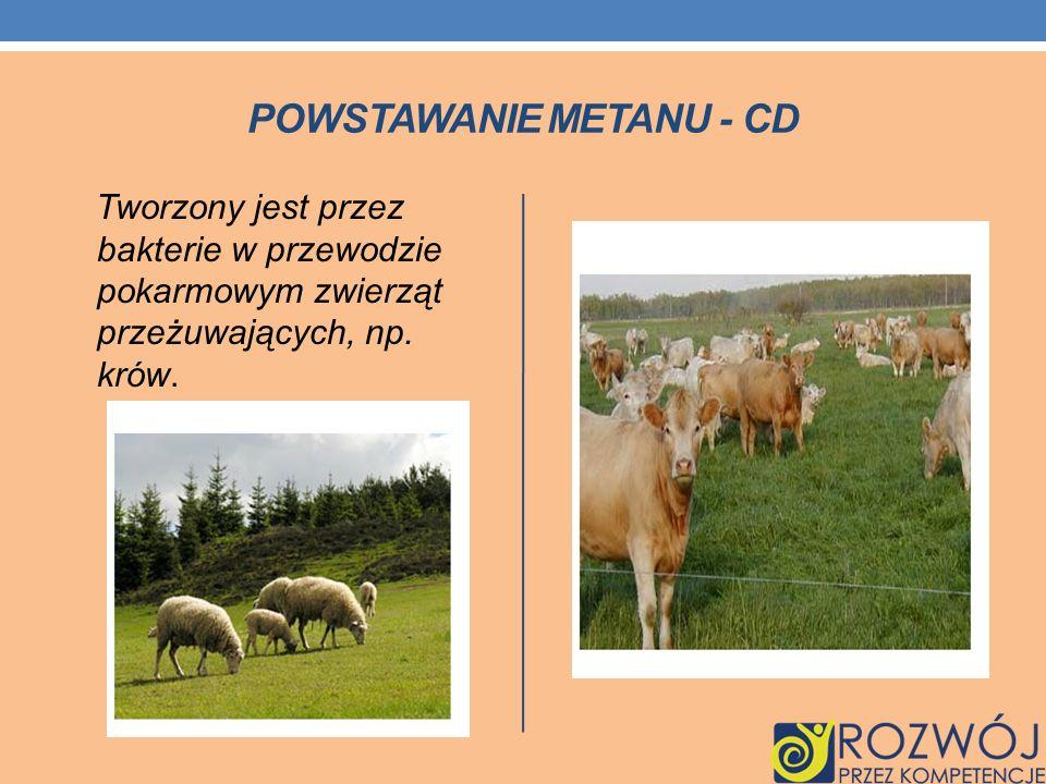 Tworzony jest przez bakterie w przewodzie pokarmowym zwierząt przeżuwających, np. krów.