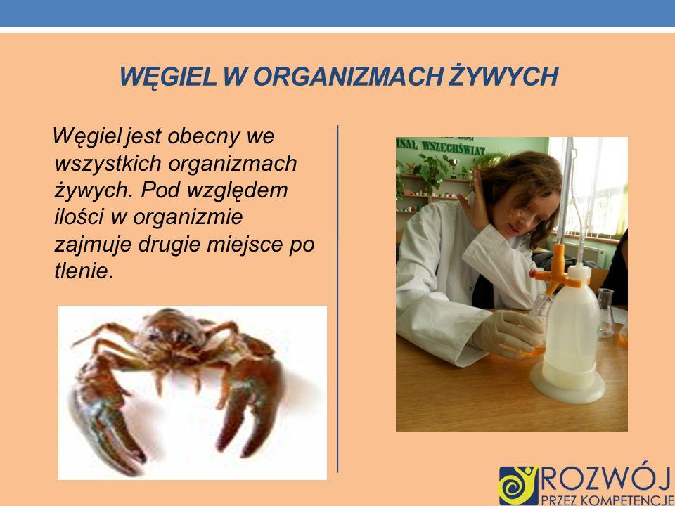 WĘGIEL W ORGANIZMACH ŻYWYCH Węgiel jest obecny we wszystkich organizmach żywych. Pod względem ilości w organizmie zajmuje drugie miejsce po tlenie.