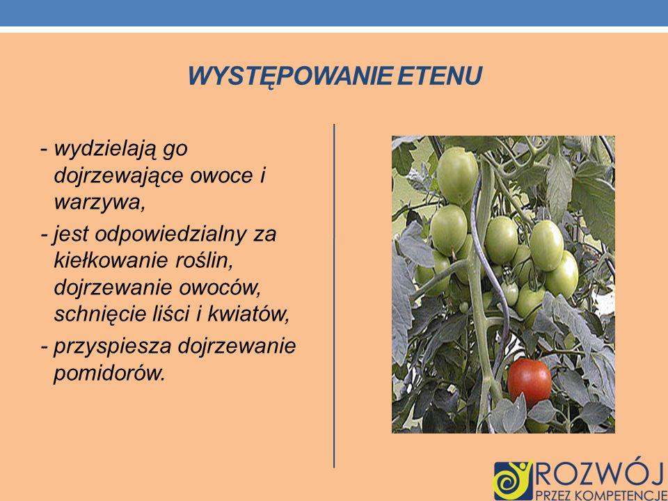WYSTĘPOWANIE ETENU - wydzielają go dojrzewające owoce i warzywa, - jest odpowiedzialny za kiełkowanie roślin, dojrzewanie owoców, schnięcie liści i kw