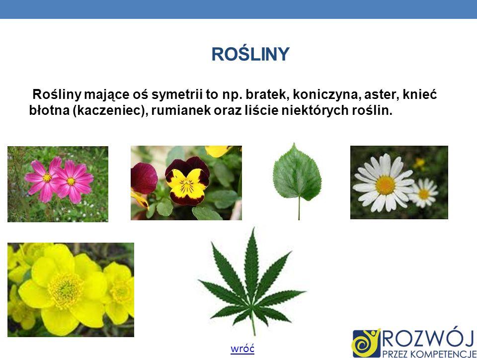 ROŚLINY Rośliny mające oś symetrii to np. bratek, koniczyna, aster, knieć błotna (kaczeniec), rumianek oraz liście niektórych roślin. wróć
