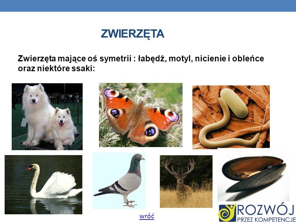ZWIERZĘTA Zwierzęta mające oś symetrii : łabędź, motyl, nicienie i obleńce oraz niektóre ssaki: wróć